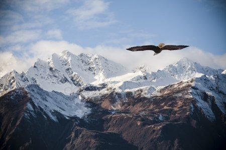 depositphotos_57054243-stock-photo-alaskan-mountains-with-flying-eagle
